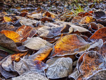 Autumn Leaves, Background Stock Photo