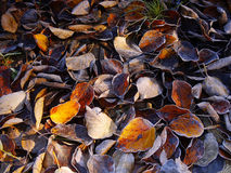Autumn Leaves, Background Royalty Free Stock Photos