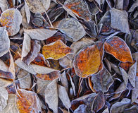 Autumn Leaves, Background Stock Photos