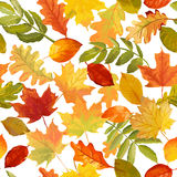 Autumn Leaves Background - modèle sans couture illustration stock
