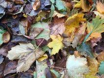 Autumn leaves background Stock Photos