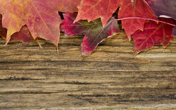 Autumn leaves background on old wood floor Royalty Free Stock Image