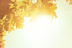 Autumn leaves background over morning sunlight Stock Photo
