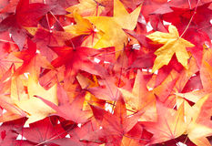 Autumn leaves background pattern. Royalty Free Stock Photography