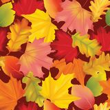 Autumn Leaves Background Pattern variopinto senza cuciture Fotografia Stock