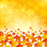Autumn Leaves Background Royalty Free Stock Photography