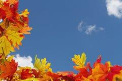 Autumn Leaves Background Stock Image