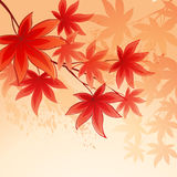 Autumn leaves  background of  sky. Vector Stock Photo