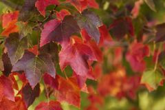 Autumn Leaves Background. Soft focus. Large file Stock Image