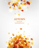 Autumn leaves background Royalty Free Stock Images