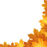Autumn leaves background. With space for text Stock Photos