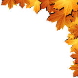Autumn leaves background with space for text Stock Photo