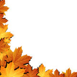 Autumn leaves background with space for text Royalty Free Stock Images