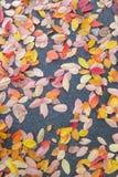Autumn leaves background - Stock Photos Stock Photo