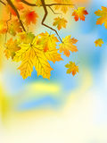 Autumn leaves background in a sunny day. Royalty Free Stock Photos