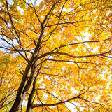 Autumn leaves background in sunny day Stock Image