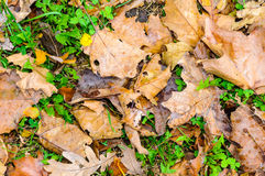 Autumn leaves background texture wallpaper Stock Photos