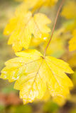 Autumn leaves background / used soft focus lens Stock Photo