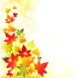 Autumn Leaves Background Vector Fotos de archivo libres de regalías