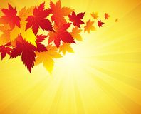 Autumn Leaves Background Vector Imagen de archivo