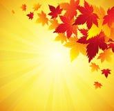 Autumn Leaves Background Vector Fotografía de archivo libre de regalías