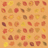 Autumn leaves background. Vector illustration Stock Photo