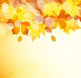 Autumn leaves background. Vector Illustration of an Autumn Design Royalty Free Stock Photo
