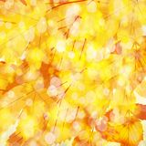 Autumn leaves background. Vector Illustration of an Autumn Design Stock Images