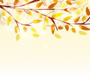 Autumn leaves background. Vector Illustration of an Autumn Design Stock Photography