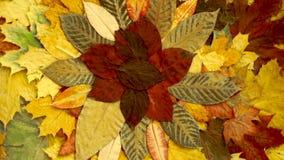 Autumn Leaves Background vermelho e alaranjado rotação filme