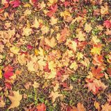 Autumn leaves background - vintage Stock Photography