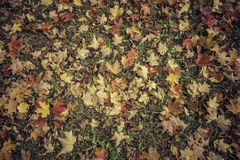 Autumn leaves background - vintage Royalty Free Stock Photo