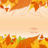 Autumn leaves background vintage Stock Photography