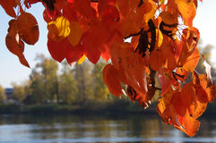Autumn leaves. On the background of water Stock Photo