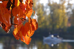Autumn leaves. On the background of water Stock Photography