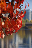Autumn leaves. On the background of water Royalty Free Stock Photography