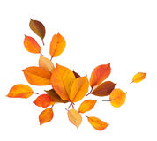 Autumn leaves background. Autumn leaves on white background Stock Photos