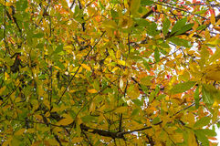 Autumn leaves background. Yellow foliage texture Stock Photography