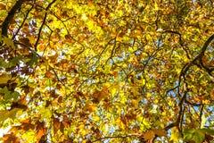 Autumn leaves background. Yellow foliage texture Royalty Free Stock Photos