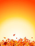 Autumn leaves background for your design Royalty Free Stock Image