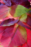 Autumn leaves backgrounds Royalty Free Stock Image