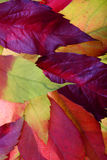Autumn leaves backgrounds royalty free stock photos
