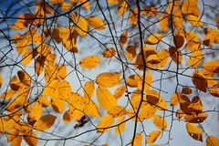 Autumn Leaves Backgrounds stock image