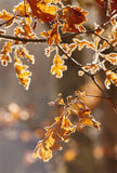 Autumn leaves backlight in a forest. Nature background. Warm ton Royalty Free Stock Images