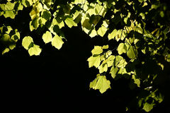 Autumn leaves in the backlight Stock Image
