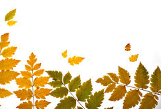 Autumn leaves backlit diagonal Stock Images