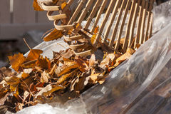 Autumn Leaves In A Bag Stock Photography