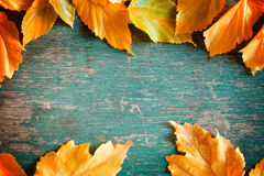 Autumn Leaves Banner Royalty Free Stock Photos