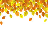 Autumn leaves banner design Royalty Free Stock Photos