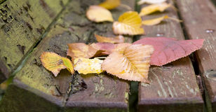 Autumn leaves banner Royalty Free Stock Image